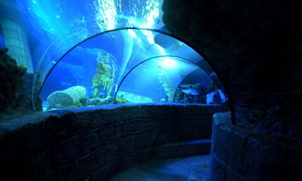 Sea Life Centre - Porto Wildlife Travel in Portugal
