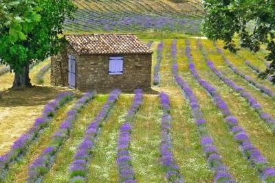 Quinta das Lavandas