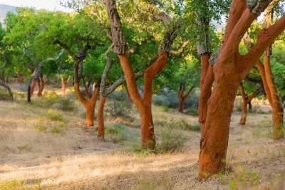 Snorkeling in Albufeira