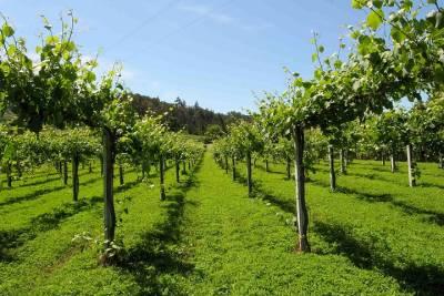 Best of Lisbon Private Walking Tour