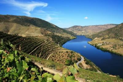 Private Douro Valley visit to three vineyards with Lunch from Porto