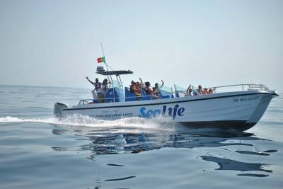 Sealife Dolphin Watching with Marine Biologists, Lagos Algarve