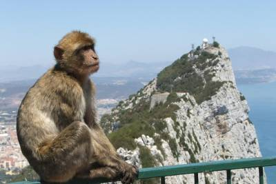 Gibraltar Day Trip with Shopping from Algarve