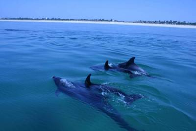 Dolphin Watching in Setubal, The Food Tour in the Market with a Local Chef
