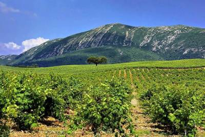 Arrabida Natural Park Full-Day Private Tour from Lisbon