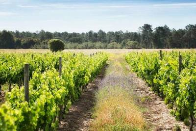 From Lisbon: Traditional Ribatejo Experience Private Tour Full Day