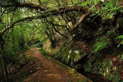 Faith and Heritage: Fátima, Batalha, Nazaré, and Óbidos Small-Group Tour from Lisbon