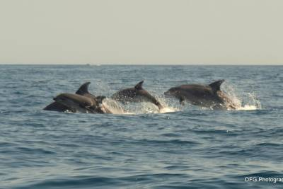 Dolphin and Whale Watching Trip from Lagos