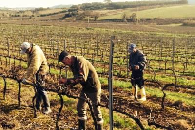 Lisbon Wine and Tapas Tasting