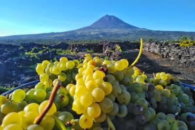 Lisbon Riverside and Cristo Rei Tuk Tuk Tour