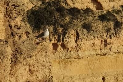 Historic Lisbon: Guided e-Bike Tour