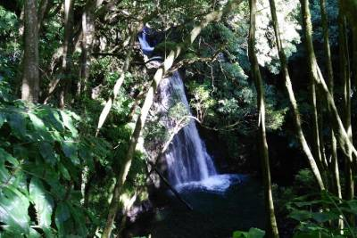 Azores 3 in 1- Walking Tour with Lunch and Termal Bath