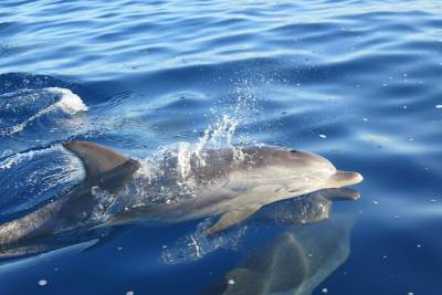 Whales and Dolphins watching Tour in the best area of Madeira!