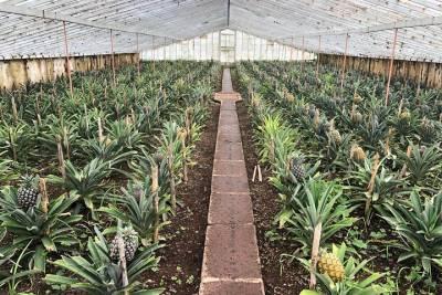 Discover Monchique