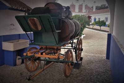 Full day Wine and Cork Tour to Alentejo from Lisbon