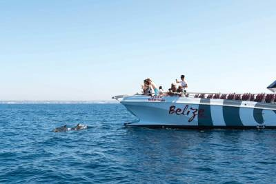 Dolphin Watching and Cave Boat Cruise from Albufeira