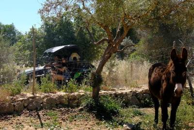 Alte Buggy Tour l Off-Road Guided Buggy Tour from Albufeira to Alte