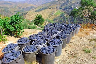 Porto and Douro Valley From Lisbon - 2 Days Private Tour
