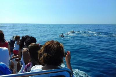 Dolphin Watching boat tour in Sesimbra - Let´s Explore!