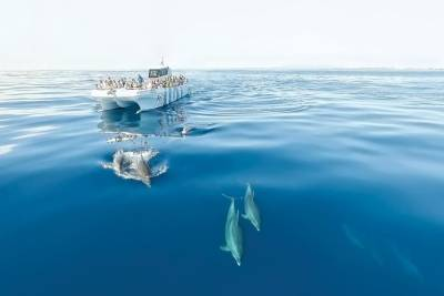 Half-Day Algarve Dolphin Watching Cruise from Albufeira with Beach BBQ Lunch