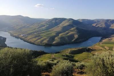 Sardinhas Porto City Van TOUR