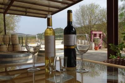 Arrabida, Palmela Wine and Tapas tasting All Day Private Tour