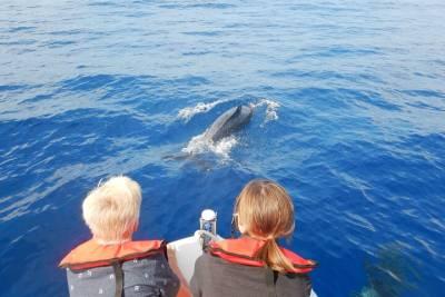 Hiking in Sintra's mountain w/ transportation from Lisbon