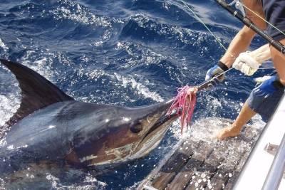 Sintra: Full-Day Private Tour Sintra, Cascais & Cabo da Roca