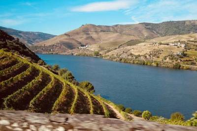 From Porto: Amazing Douro with Lunch Included
