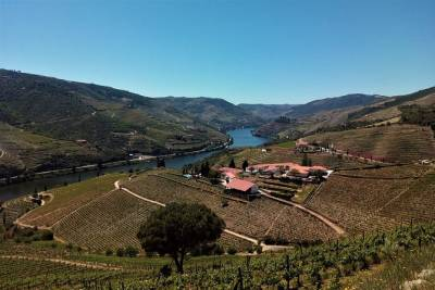 Douro Valley & Vinho Verde Small Group Tour: Visit Amarante, Wine Tasting, Lunch