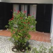 Villa Brito
