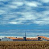 Farm near Sagres