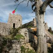 Tree and Turret at Moorish Castle - Sintra