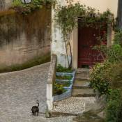 Dog and Doorway - Sintra