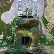 Woodland Spring - Sintra