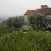 Tomar Countryside