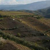 Countryside between Vila Real and Lamego