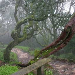 Foggy Bucaco Forest Path