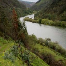 River Mondego