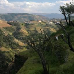 Countryside near Vila Real