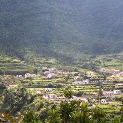 Madeira Terraced Fields