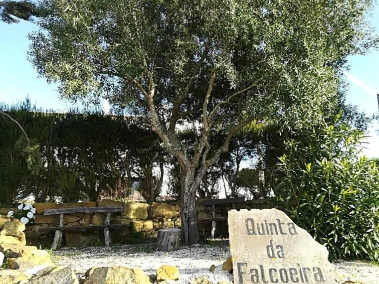 Quinta da Falcoeira
