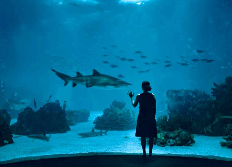 Lisbon Oceanarium shark