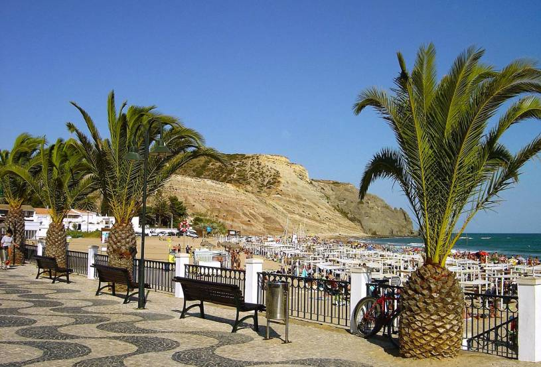 Praia da Luz palm trees