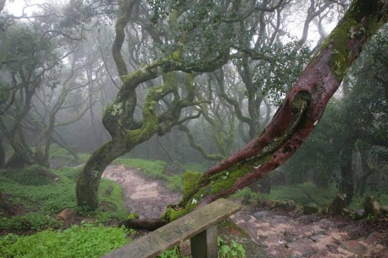 Foggy Bucaco Forest Path