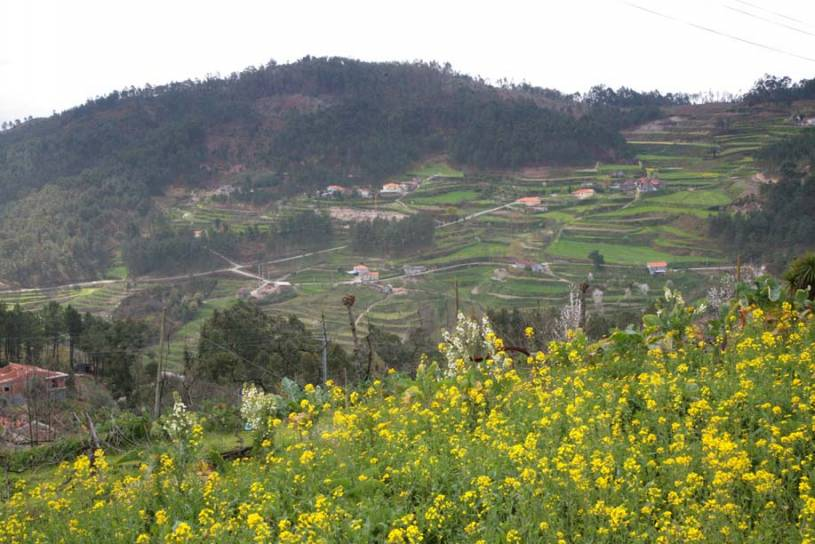 Terraced Fields in the Douro Valley