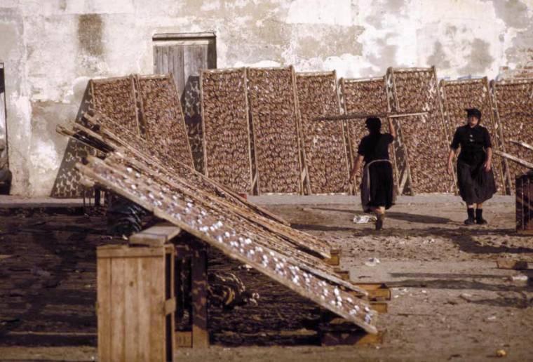 Fish Drying Racks in Nazare