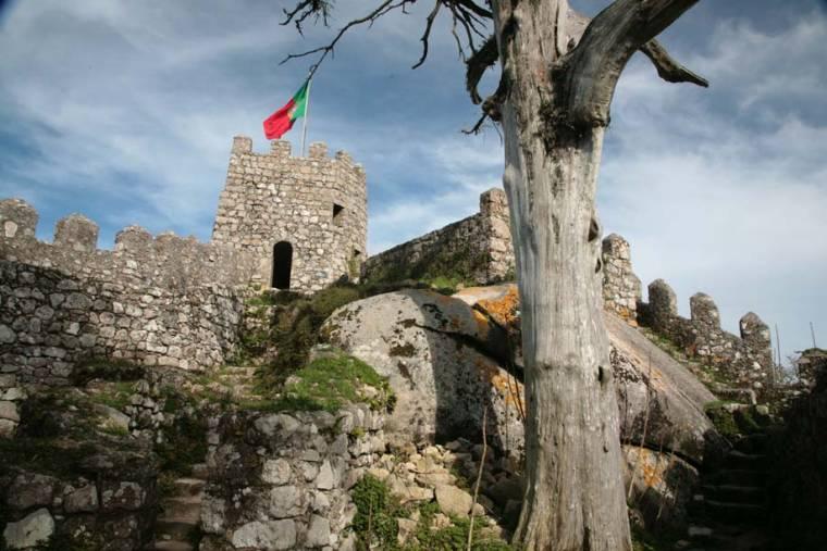 Tree and Turret at Moorish Castle - Sintra