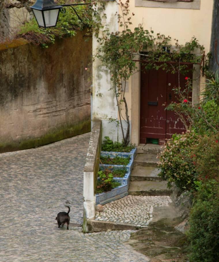 Dog and Doorway - Sintra