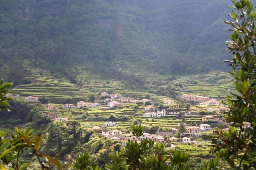 Madeira Terraced Fields